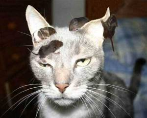 kittyMice